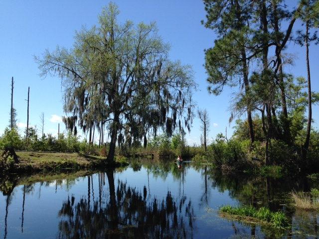 The New Landscape Of Okefenokee